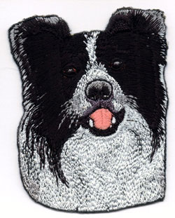 Brodyr - Border Collie