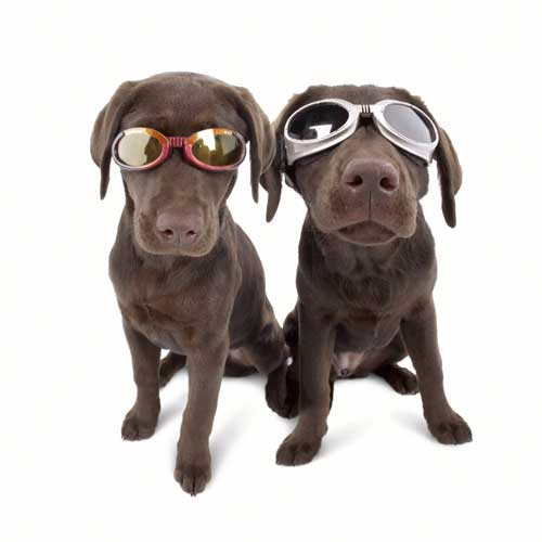 Doggles Glasögon, Medium