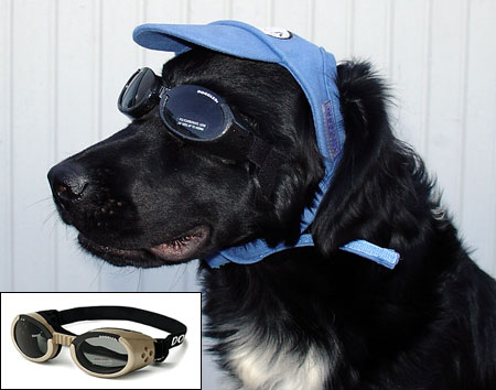 DOGGLES L Glasögon