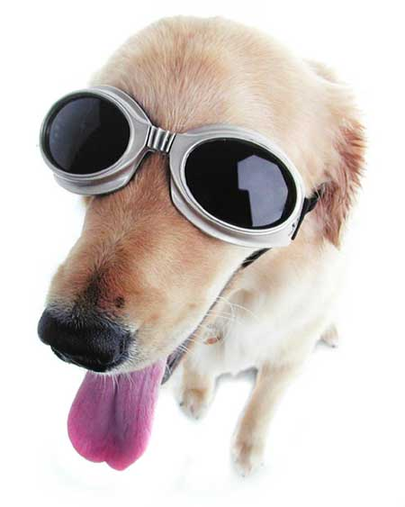 Doggles Glasögon, XL