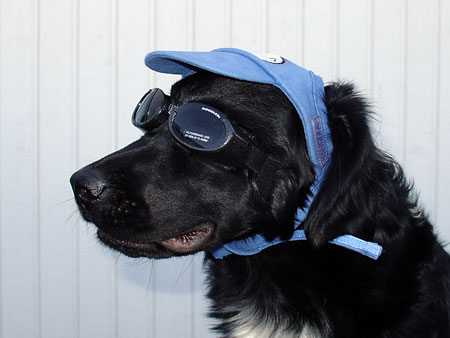 DOGGLES KEPS  LARGE