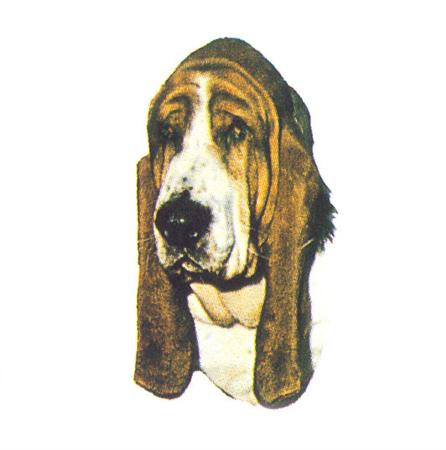 Hunddekal - Bassethound (huv)
