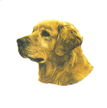 Hunddekal - Golden Retriever (huv)