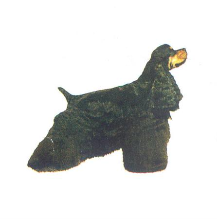 Hunddekal - Am cocker black/tan (hel)