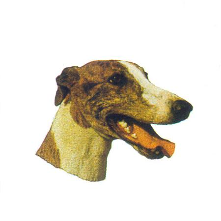 Hunddekal - Greyhound brindle (huv)