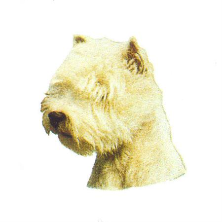 Hunddekal - West highl. white terrier (huv)