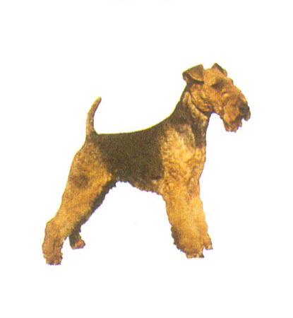 Hunddekal - Welsh terrier (hel)
