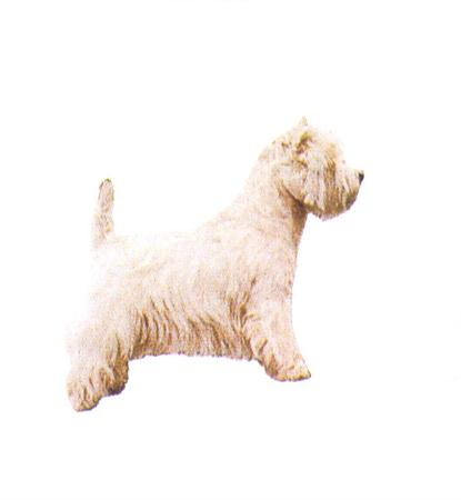 Hunddekal - West highl. wh. terrier (hel)