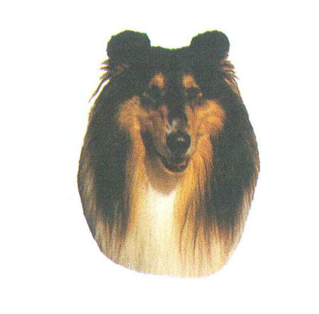 Hunddekal - Collie tricolour (huv)