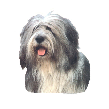 Hunddekal - Old eng. sheepdog (huv)